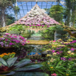 Enter a World of Spectacular Color –  the Magnificent Orchid Thailand Show at the New York Botanical Garden.