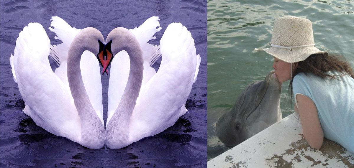joy_swans_1