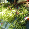 palm sunday philippines