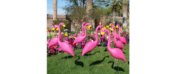 plastic_flamingo_1