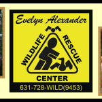 Evelyn Alexander Wildlife Rescue Center