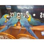 parrots_4_peace_1